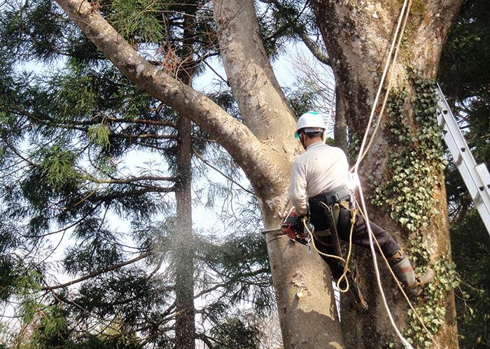特殊伐採事業